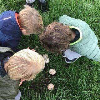 🍁🍂🍄 #kinderopvang#agrarischekinderopvang#boerderij#natuur#pedagogischmedewerker#kinderen#ouders#buitenleven#herfst#paddestoel